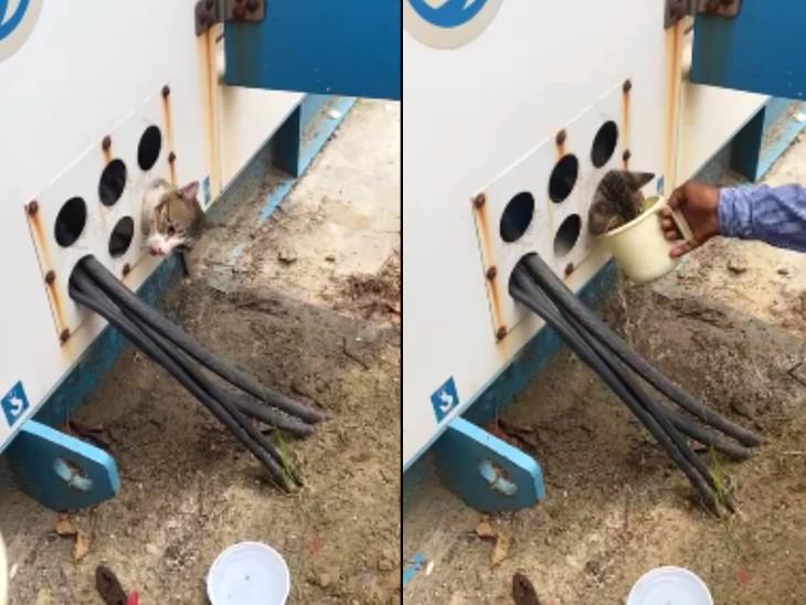 बिल्ली की गर्दन जेनरेटर के तार सप्लाई के छेद में फंस गई। बाहर निकालने को लेकर कड़ी मशक्कत की गई, इस दौरान लोगों ने उसे पानी भी पिलाया।