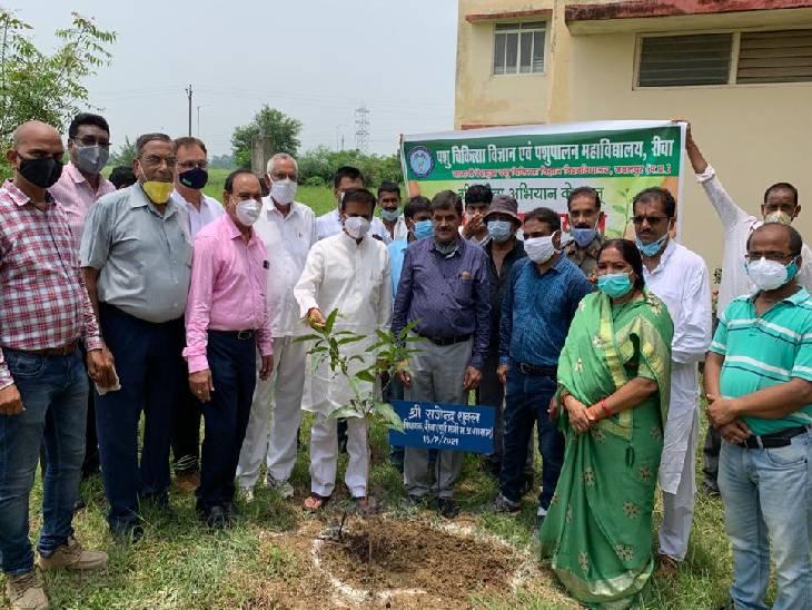 वेटरनरी कॉलेज कैंपस में लगे 251 वृक्ष, रीवा विधायक बोले- सुनहरे भविष्य के लिए पौधारोपण को जन आंदोलन बनाए रीवा,Rewa - Dainik Bhaskar
