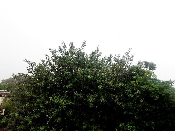 इस साल 80 से 90 फीसदी तक का हो चुका है फसलों का नुकसान, बर्बादी की कगार पर उड़द और तिल की खेती झांसी,Jhansi - Dainik Bhaskar