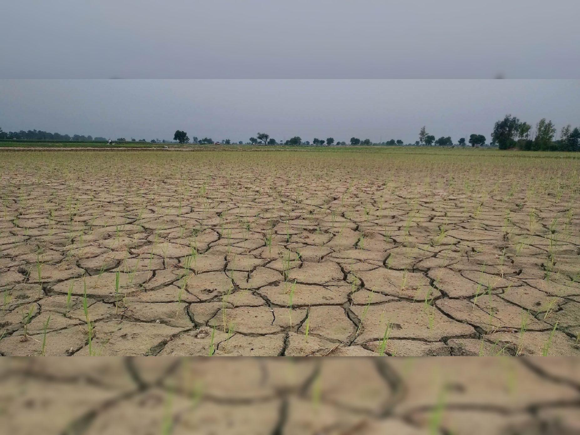 इस मानसून सीजन में अब तक कम हुई है 50% बारिश, बंगाल की खाड़ी में वायुदाब, कल अच्छी बारिश की आस|रोहतक,Rohtak - Dainik Bhaskar