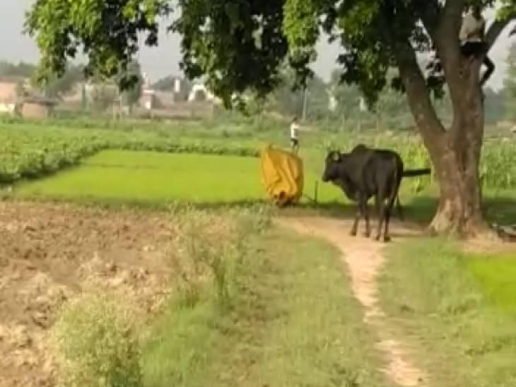 जबलपुर में खेत में काम कर रहे किसान को सांड ने उठाकर पटका, 22 दिन अस्पताल में जिंदगी-मौत के बीच चला संघर्ष|जबलपुर,Jabalpur - Dainik Bhaskar