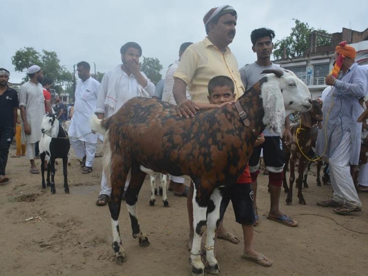 बकरीद पर कुर्बानी के लिए रामपुर का सुल्तान नाम का बकरा 1.30 लाख रुपये में बिका।
