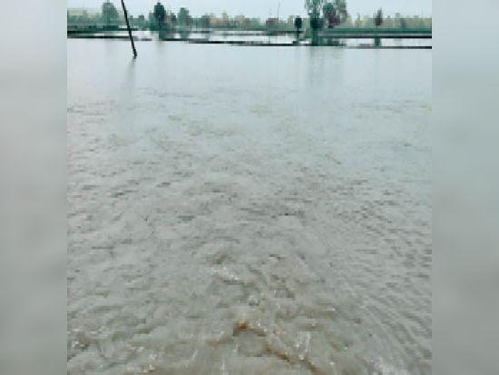 जाटौली के खेतों में भरा बारिस का पानी। - Dainik Bhaskar