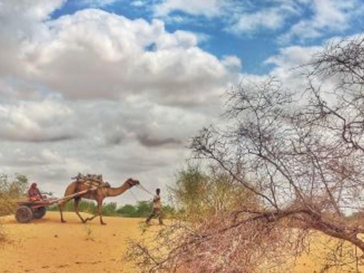 अभी सामान्य से 2% ज्यादा, 7 दिन अच्छी बारिश नहीं हुई तो माइनस में जाएंगे|बीकानेर,Bikaner - Dainik Bhaskar