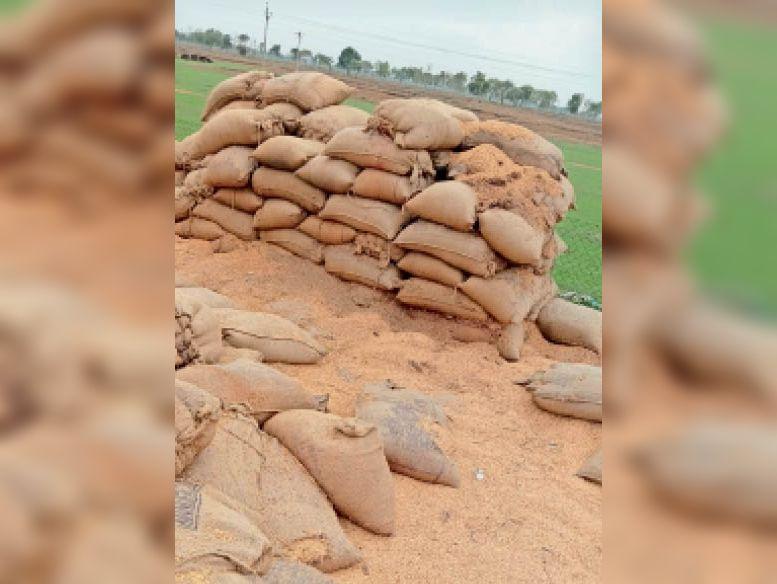 सोसाइटियों में धान इस तरह खुले में पड़ा हुआ है। - Dainik Bhaskar