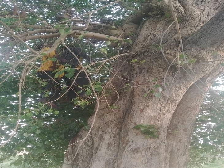 पेड़ पर लटके युवक युवती। - Dainik Bhaskar