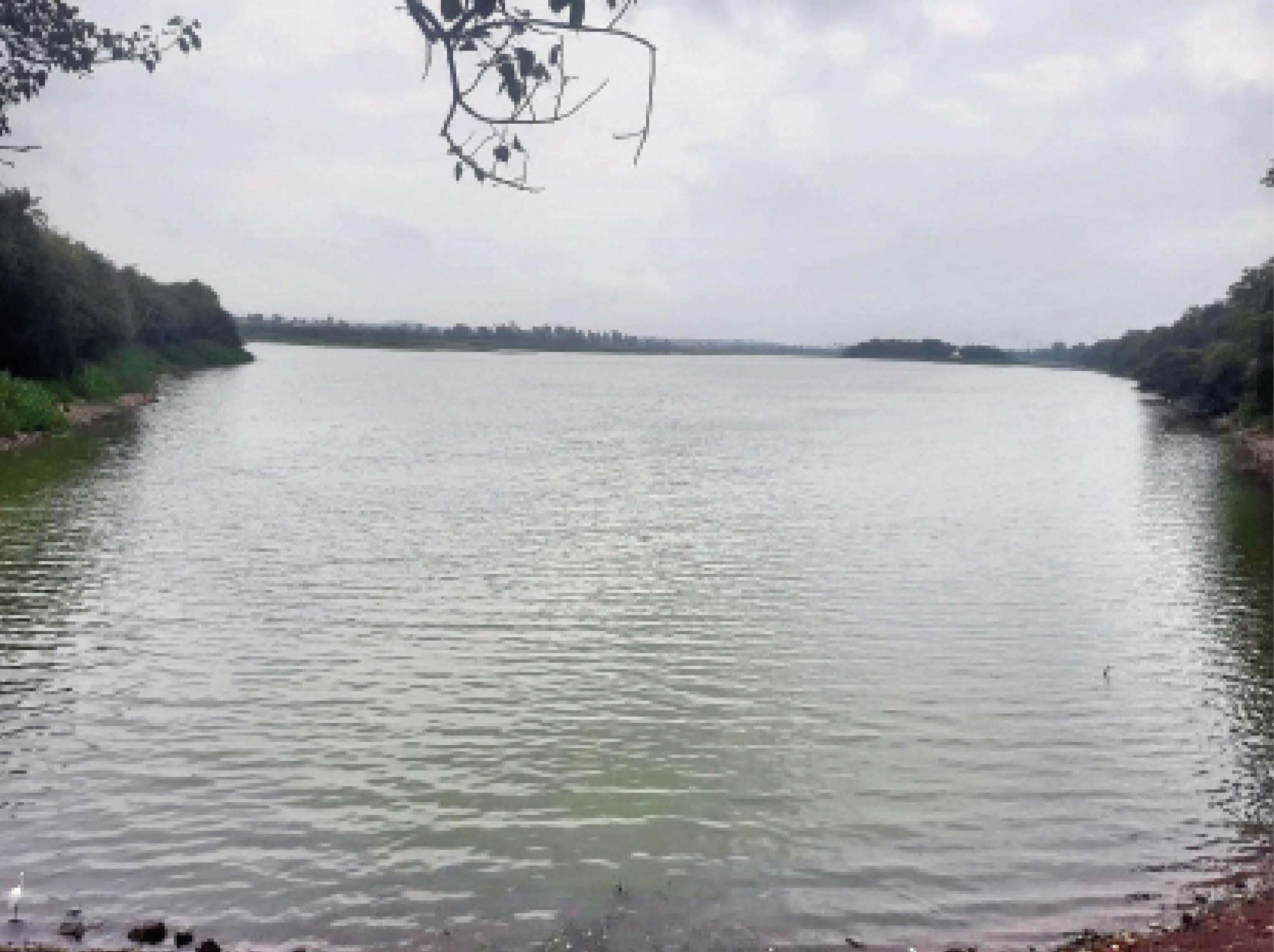 भरने लगे तालाब - Dainik Bhaskar
