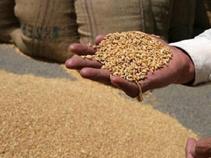 राज्य सरकार ने मई 2020 के बाद से प्रदेश में किसी भी व्यक्ति का नाम खाद्य सुरक्षा याेजना में नहीं जाेड़ा है। - Dainik Bhaskar