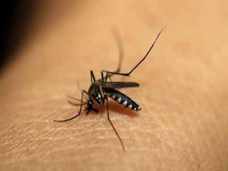 डेंगू के केस - Dainik Bhaskar