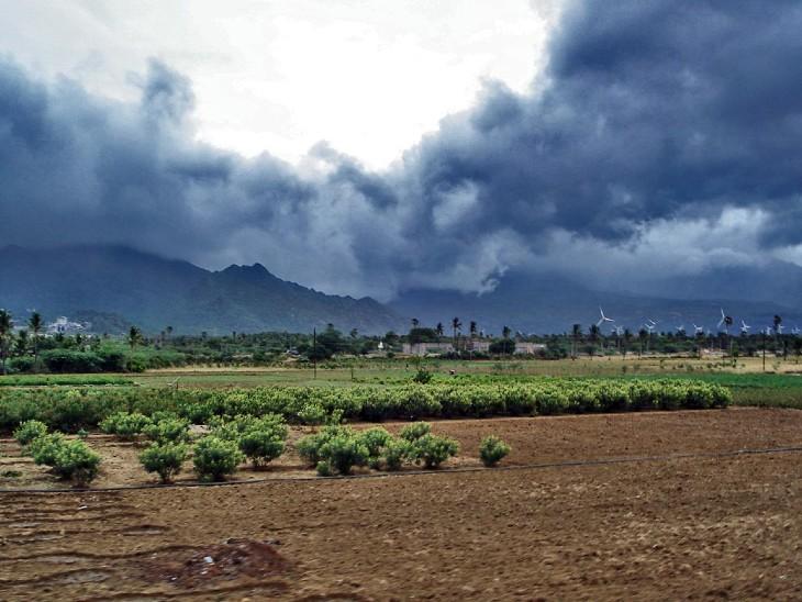 किसानों ने अब 52 हजार हेक्टेयर में लगाया मक्का, मूंग और कपास - Dainik Bhaskar