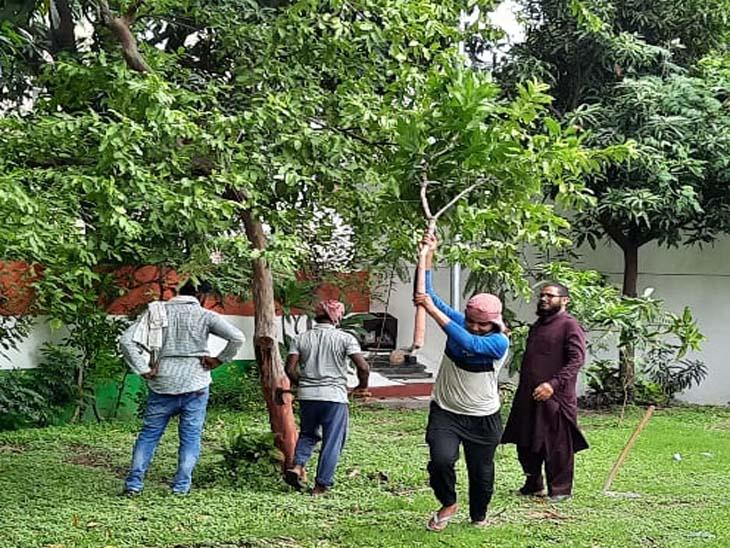चंडीगढ़ कांग्रेस भवन में नवजोत सिंह सिद्धू की ताजपोशी को लेकर पीपल,आम और अमरूद पेड़ों पर चली कुल्हाड़ी|चंडीगढ़,Chandigarh - Dainik Bhaskar