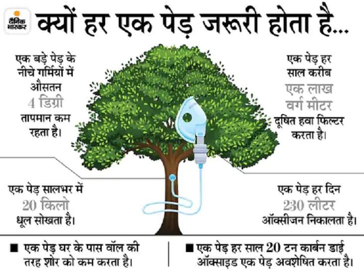 Chhattisgarh 2000 Trees Cut Planning; Environmental Protest Today In Balod | छत्तीसगढ़ में 8 किलोमीटर सड़क बनाने के लिए काटे जाने हैं 2000 पेड़; चिपको आंदोलन के बाद अब पेड़ों पर लगा रहे भोलेनाथ के फोटो - WPage - क्यूंकि हिंदी हमारी पहचान हैं