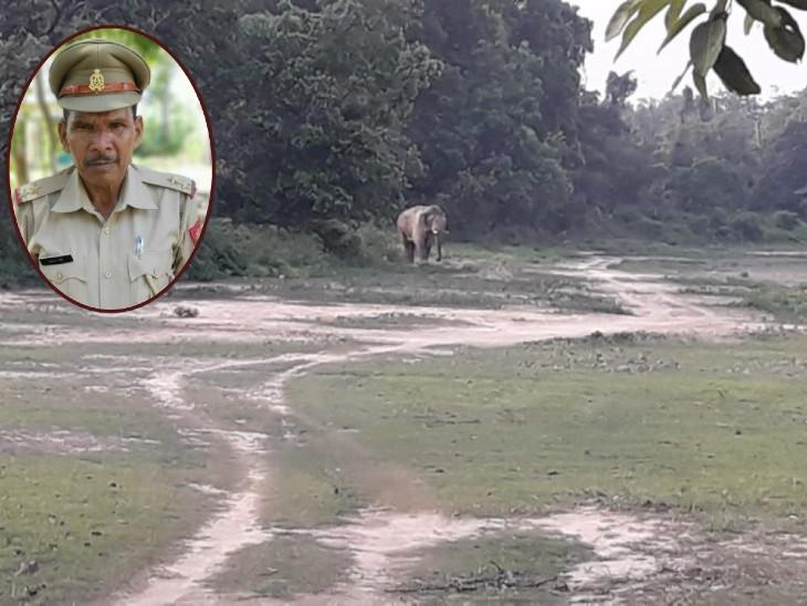 पेट्रोलिंग कर रहे वन दरोगा पर जंगली हाथी ने किया हमला - Dainik Bhaskar
