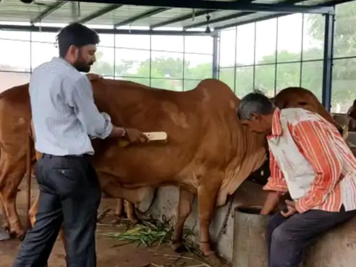 डेयरी फार्मिंग के लिए गायों की देखभाल करना भी जरूरी होता है। हर समय उनके हेल्थ का ख्याल रखना होता है।