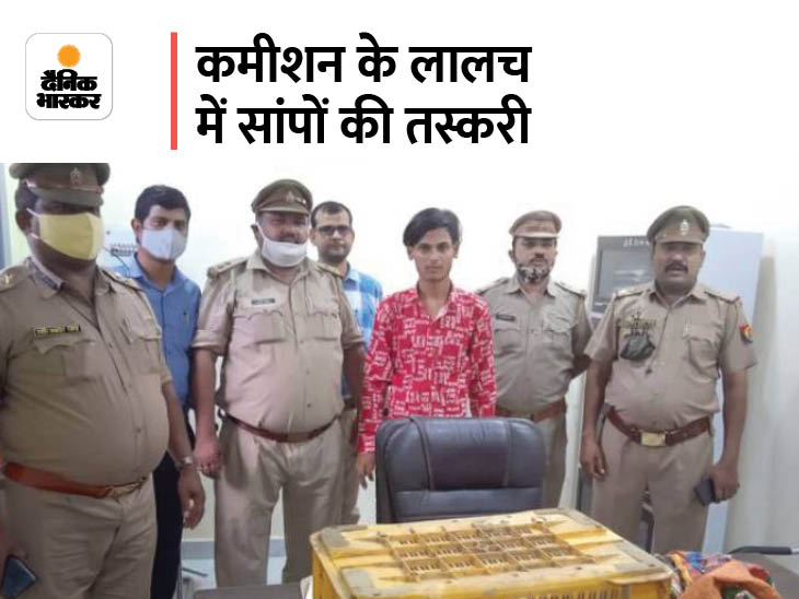 रेड सैंड बोआ प्रजाति के दोमुहे सापों की करते थे तस्करी, एड्स की दवा बनाने में होता है इनका इस्तेमाल, एक गिरफ्तार लखनऊ,Lucknow - Dainik Bhaskar