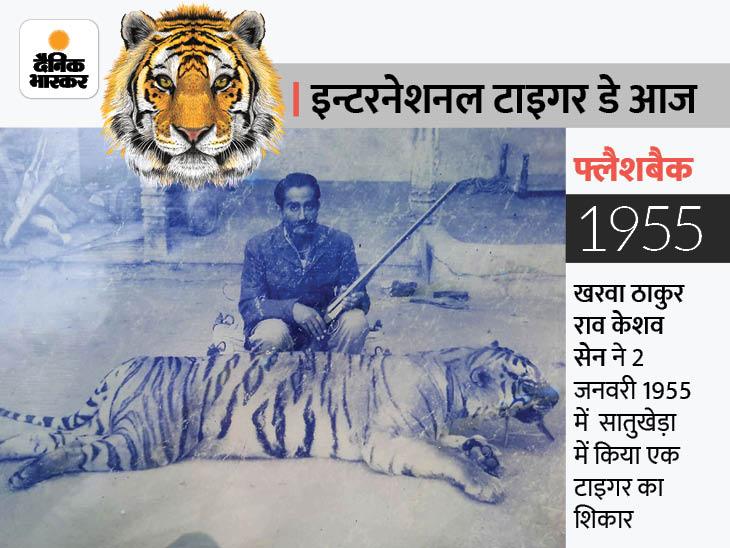 अजमेर के जंगलों में भी सुनाई देती थी टाइगर की दहाड़; करीब 65 साल पहले अंतिम बार देखे, आतंक का पर्याय बनने पर करते थे शिकार|अजमेर,Ajmer - Dainik Bhaskar