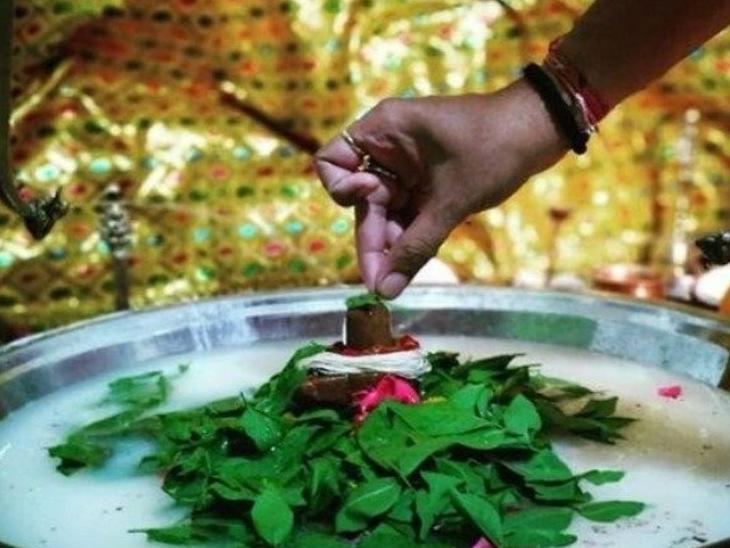 संपन्नता और समृद्धि देने वाला होता है बिल्वपत्र, इसके बिना अधूरी मानी जाती है शिव पूजा धर्म,Dharm - Dainik Bhaskar