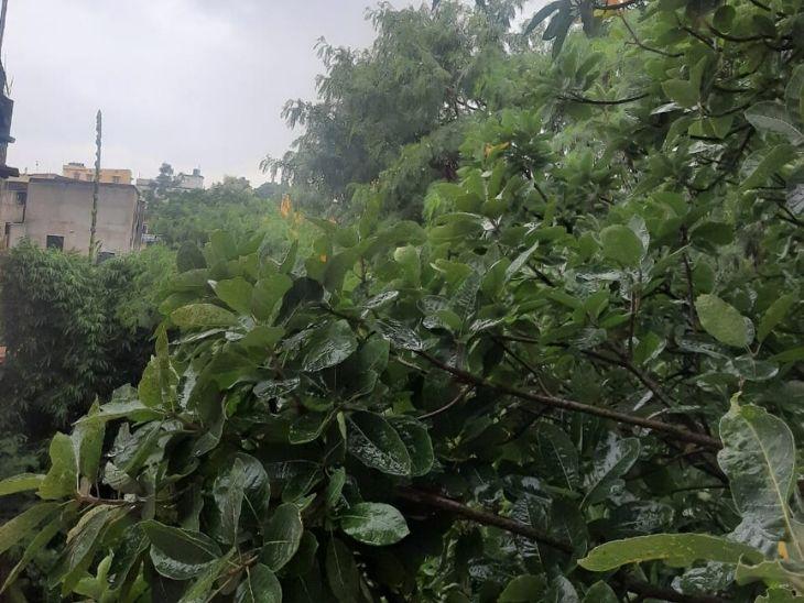 रांची में सुबह से हो रही है झमाझम बारिश, देवघर, धनबाद, दुमका, गिरिडीह, गोड्डा, पाकुड़ और साहेबगंज में वज्रपात के साथ आज भारी बारिश के आसार|रांची,Ranchi - Dainik Bhaskar