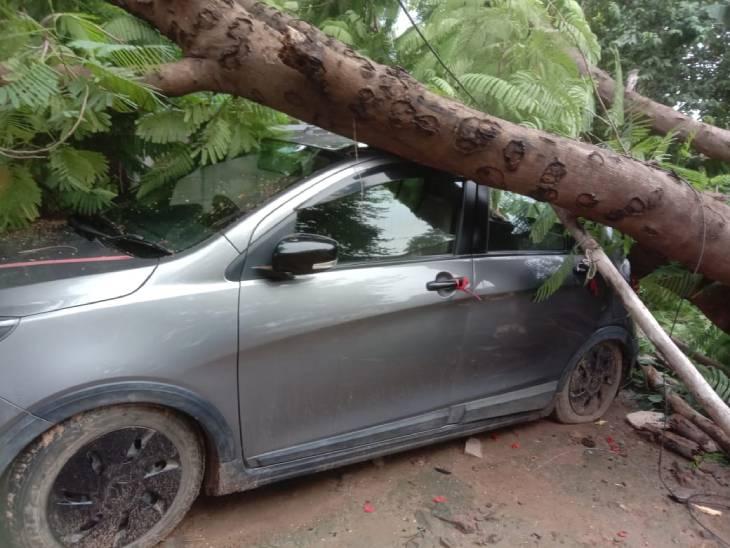 रीवा के त्योंथर सिविल अस्पताल परिसर में खड़ी कार पर गिरा पेड़, कोई जनहानि नहीं, कुछ समय के लिए मची अफरा-तफरी|रीवा,Rewa - Dainik Bhaskar