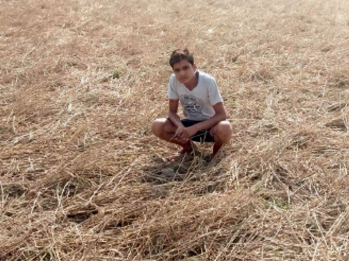 भिंड के राऊपुरा में पिछले साल इस तरह ओलावृष्टि से फसल बर्बाद हुई थी। यह फोटो उसी समय का है। - Dainik Bhaskar