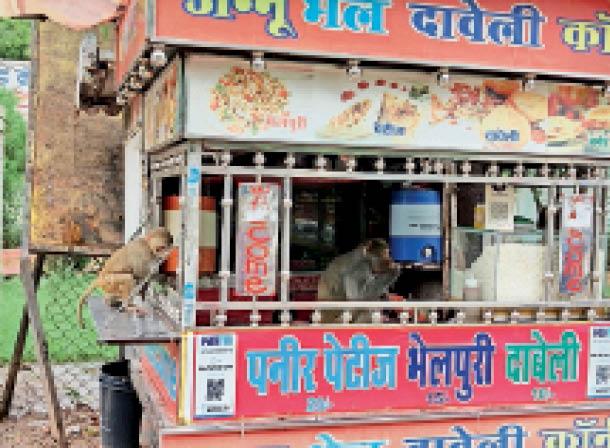 शहर में बंदरों का आतंक, घरों व गुमटियों में घुस रहे, प्राचार्य कक्ष में भी किया उत्पात डबरा,Dabra - Dainik Bhaskar