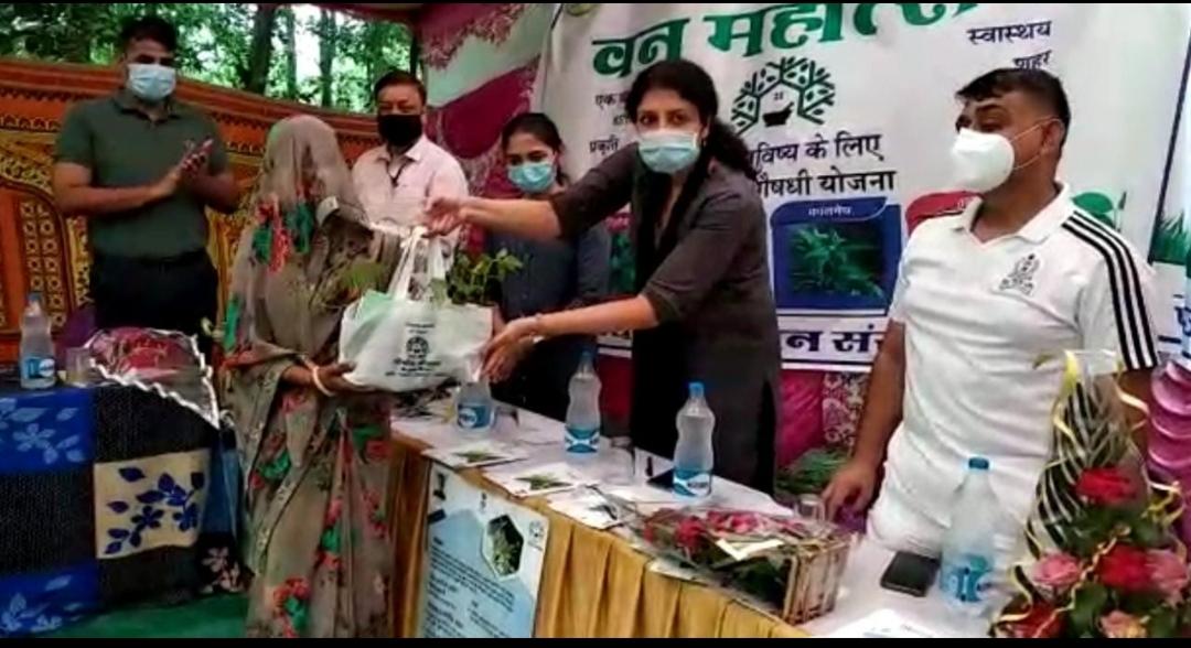 कलेक्टर ने औषधीय पौधों का किया वितरण, 11 लाख से अधिक पौधे बांटेगा वन विभाग टोंक,Tonk - Dainik Bhaskar