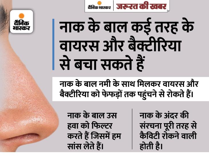 बात नाक के बाल की नहीं, अस्थमा जैसी बीमारियों का जोखिम घटाने की है; इन्हें वैक्स करने से रेस्पिरेटरी इन्फेक्शन का खतरा बढ़ेगा|ज़रुरत की खबर,Zaroorat ki Khabar - Dainik Bhaskar