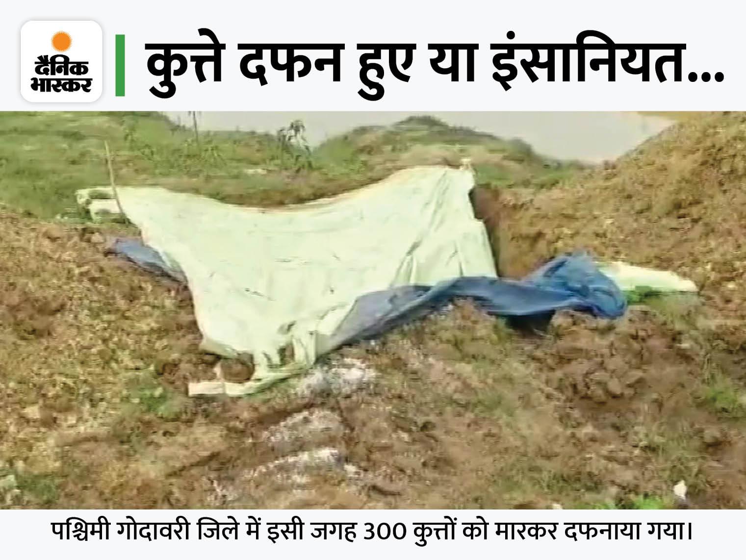 पश्चिम गाेदावरी में पंचायत के फरमान पर 300 कुत्तों को जहरीला इंजेक्शन देकर मार डाला, एक साथ गड्ढे में दफनाया|देश,National - Dainik Bhaskar