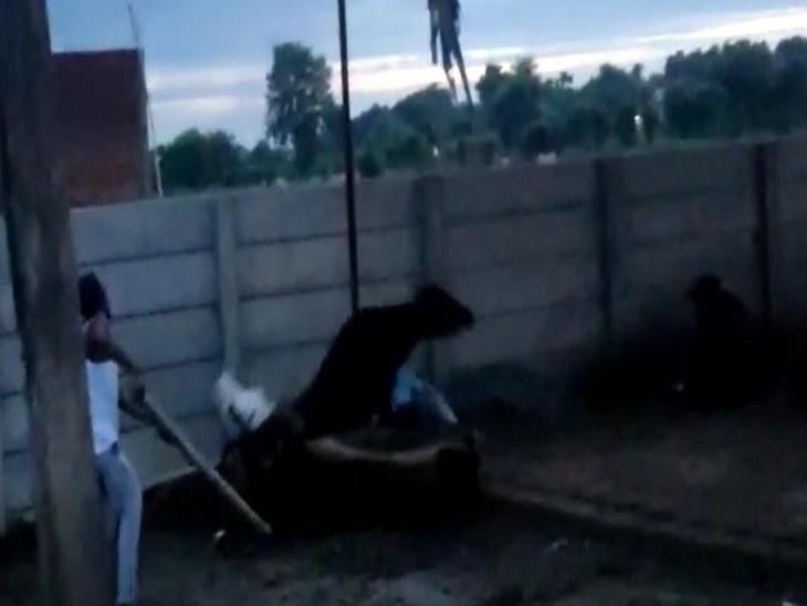 वाराणसी में गोवंश आश्रम में गायों को निर्ममता से पीटने का वीडियो वायरल, प्रधान ने की शिकायत; केयर टेकर गिरफ्तार|वाराणसी,Varanasi - Dainik Bhaskar