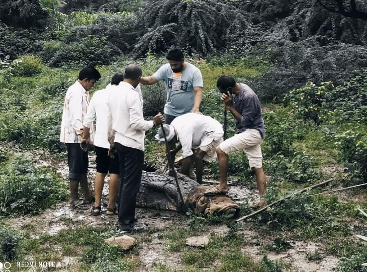 प्लाट में आने के बाद मगरमच्छ को देखने लोगों की भीड़ जमा होने लगी थी।