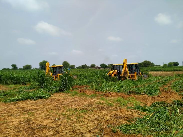 33 बीघा जमीन पर खड़ी बाजरे की फसल को जेसीबी से रौंदा, 20 दिन पहले दिया था जमीन खाली करने का नोटिस|जयपुर,Jaipur - Dainik Bhaskar