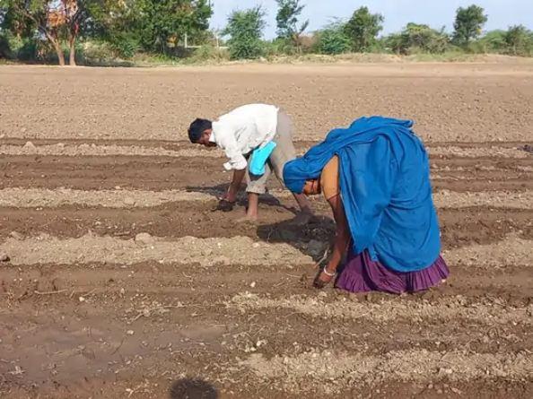 मौसम विभाग के अनुसार 15 अगस्त तक राज्य में किसी सिस्टम के सक्रिय होने की उम्मीद नहीं है। - Dainik Bhaskar