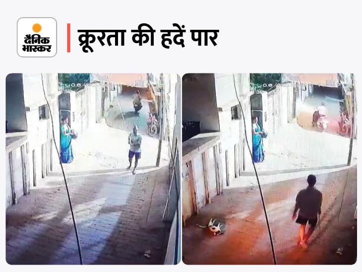 गली में बैठे कुत्ते को युवक ने लोहे की रॉड से पीटा, मुंह और पैरों से बहने लगा खून; मेनका गांधी की संस्था FIR कराएगी, पुलिस ने हिरासत में लिया|बरेली,Bareilly - Dainik Bhaskar