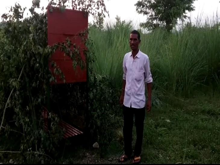 DFO ईश्वर चंद सिंह ने बताया कि शुक्रवार की शाम को ग्लोकल यूनिवर्सिटी के कैपस में दो पिंजरे शावकों को पकड़ने के लिए लगाए है। - Dainik Bhaskar