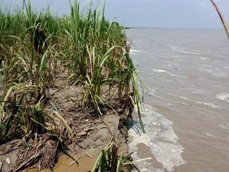 सेमरा लबेदाहा पंचायत मेंकरीब 300 में लगी फसल हुई खत्म, किसानों के बीच हाहाकार, कटाव से निजात दिलाने की मांग|बिहार,Bihar - Dainik Bhaskar