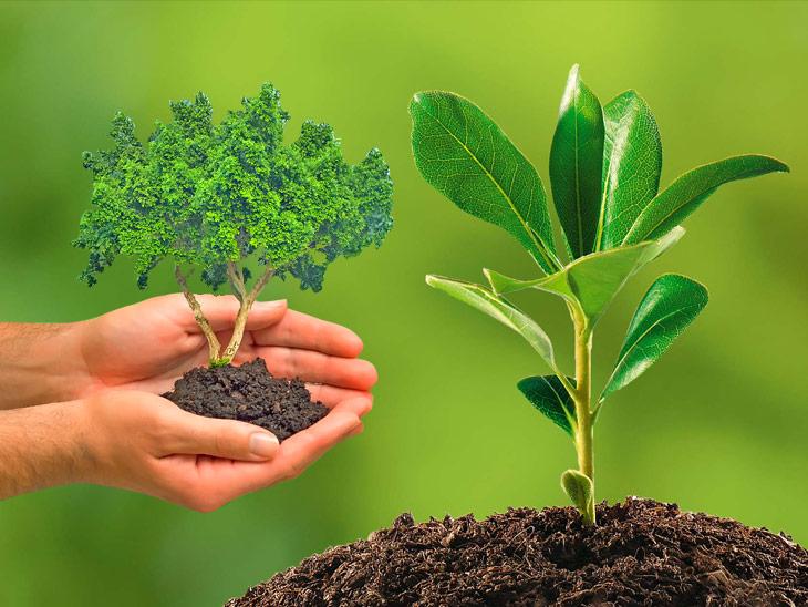 रविपुष्य और सर्वार्थसिद्धि योग से महत्व हुआ दोगुना, जन्म तारीख और राशि अनुसार लगा सकते हैं पेड़-पौधे|धर्म,Dharm - Dainik Bhaskar