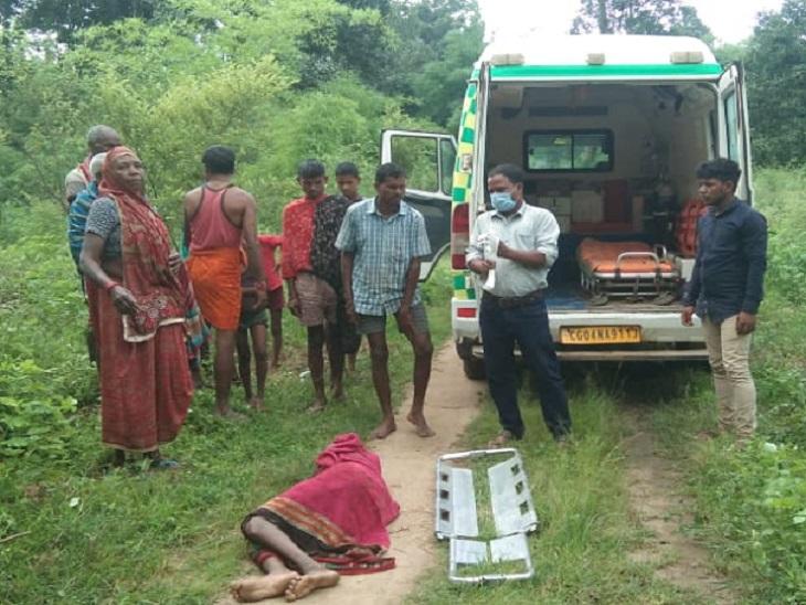 भालुओं ने महिला पर किया हमला, चेहरे और पीठ से नोंच ले गए मांस; धान की रोपाई के लिए जा रही थी खेत|छत्तीसगढ़,Chhattisgarh - Dainik Bhaskar