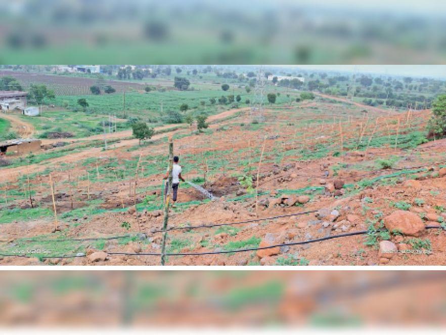 पौधों की सुरक्षा के लिए पहाड़ी पर तार फेंसिंग कर बांस के पौधे लगाएंगे। - Dainik Bhaskar