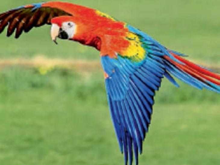 मानसून के बाद खुलेगा शहर का पहला बर्ड पार्क, यहां 47 प्रजातियों के 1500 बर्ड्स देख सकेंगे लोग|चंडीगढ़,Chandigarh - Dainik Bhaskar