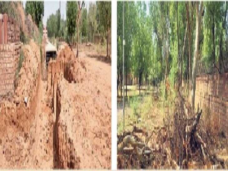 सरदार क्लब से जेएनवीयू परिसर के नाले को जोड़ने के लिए पेड़ों को काटना पड़ा, जिसका स्टूडेंट्स ने विरोध किया इसके बाद काम आगे नहीं बढ़ा। - Dainik Bhaskar