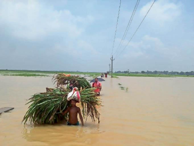 राघोपुर के हजपूर्वा चकसिंगार गांव में जानवर के लिए बाढ़ के पानी से गुजरकर चारा ले जाते किसान। - Dainik Bhaskar