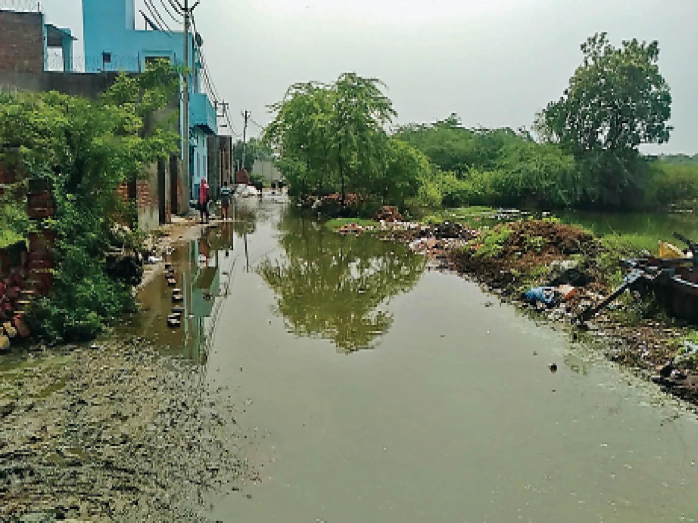 चुलियाना गांव में तलाब ओवरफ्लो होने से गलियाें में भरा पानी। - Dainik Bhaskar