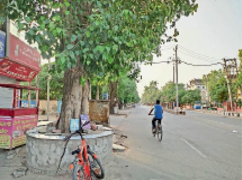 अभी ये है पेड़ों का हाल- एमसी कॉलोनी के पास कंकरीट के बीच पेड़। - Dainik Bhaskar
