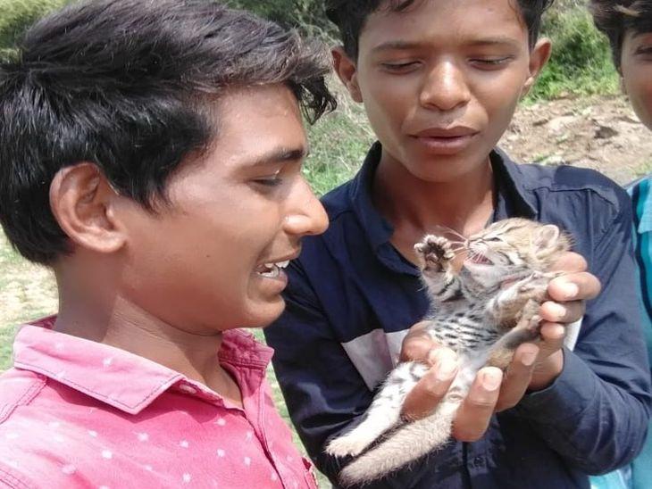 देर तक खेलते रहे बच्चे, फिर पैंथर का बच्चा समझ जंगल में छोड़ा; वन विभाग को फोटो भेजी तो पता चला जंगली बिल्ली का बच्चा था|अजमेर,Ajmer - Dainik Bhaskar