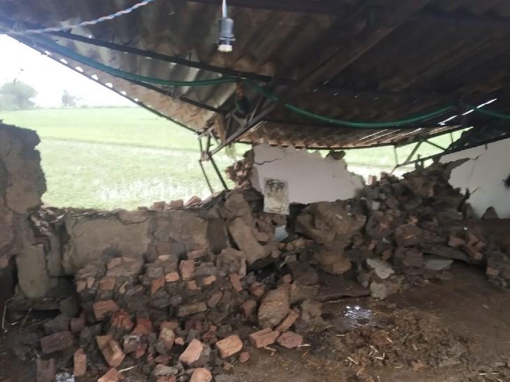 बारिश के कारण मकान गिरने से उसमें रखी धान खराब हो गई।