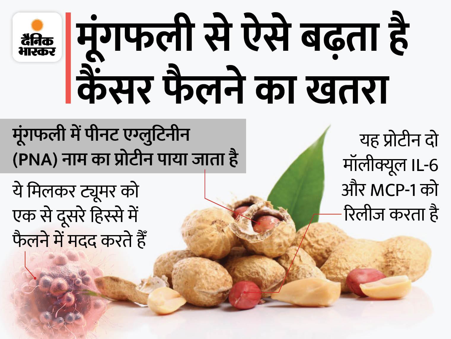 मूंगफली ज्यादा खाने से पूरे शरीर में कैंसर फैलने का खतरा बढ़ता है, एक दिन में 28 ग्राम से ज्यादा मूंगफली खाना ठीक नहीं|लाइफ & साइंस,Happy Life - Dainik Bhaskar