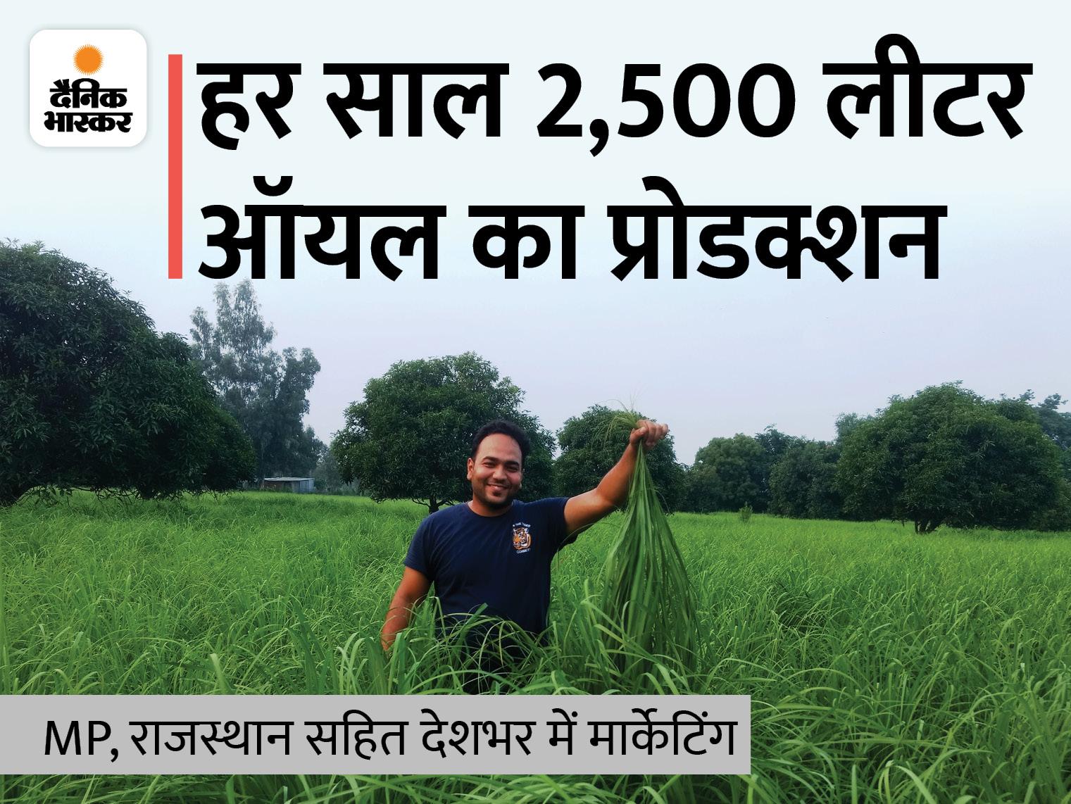 नौकरी छोड़ लखनऊ के समीर ने लेमन ग्रास की खेती शुरू की, अब लाखों में कमाई, 100 लोगों को नौकरी भी दी|DB ओरिजिनल,DB Original - Dainik Bhaskar