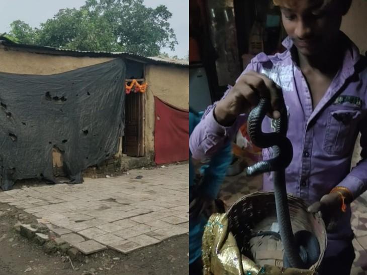 घरों में नजर आते थे सैकड़ों सांप, अब रोजी-रोटी का संकट, सपेरे बोले- एक दिन की छूट दें तो बड़ी राहत मिलेगी; अजीत जोगी ने बसाया था ये मोहल्ला इंदौर,Indore - Dainik Bhaskar