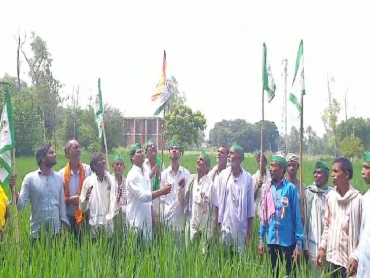 तीन कृषि बिल के विरोध में लखनऊ में किसानों ने खेतों में फहराया तिरंगा, बोले- कानून वापस ले सरकार लखनऊ,Lucknow - Dainik Bhaskar