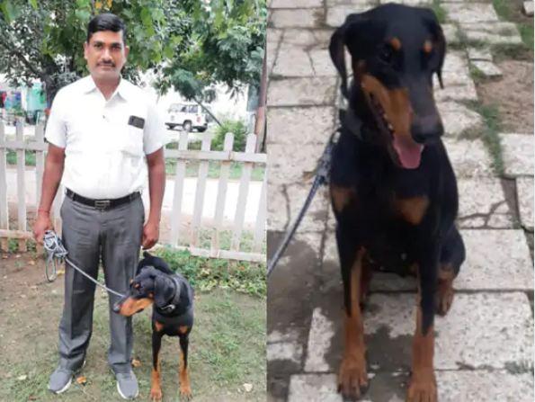 Vadodara Police's sniffer dog 'Java'